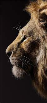The lion king iPhone 11 HD Wallpapers ...