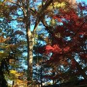 photo of shifflett tree service derwood md united states shifflett tree service s61