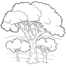 Coloring Pages Forest Animals Forest Trees Coloring Pages Forest Animals Coloring Pages Free