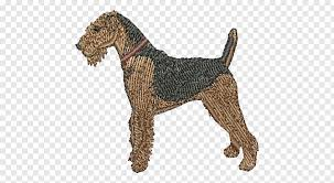 Irish Terrier Airedale Terrier Dog Breed Airedale Terrier
