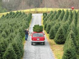Local Christmas Tree Lots And FarmsLocal Christmas Tree Lots