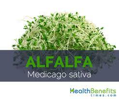 alfalfa cago sativa
