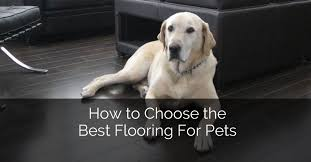 how to choose the best flooring for pets home remodeling contractors sebring design build