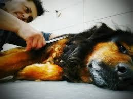 <b>Fashion DOG</b> - Home | Facebook