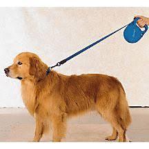 Πώς επιλέγουμε λουρί για τον σκύλο μας;