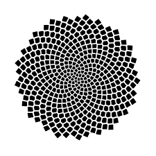 Mathematical Patterns Classy Fibonacci Numbers Of Sunflower Seed Spirals National Museum Of