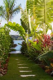 Small Picture Beautiful Tropical Bananas Tree Garden Patio Landscape Tropical