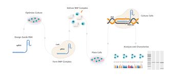 Crispr Cas9 Guide Rna Design Arcitect Crispr Cas9 Genome Editing System