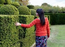How to Trim Bushes into Shapes thumbnail