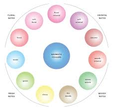 Fragrance Wheel Perfume Classification Chart Cabinet Notes On Scent