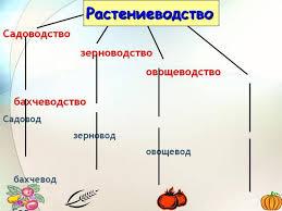 такое растениеводство в биологии Что такое растениеводство в биологии