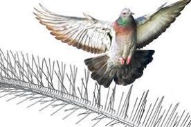 bird deters nixalite