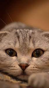 Iphone 6 Cute Cat Wallpaper Hd ...