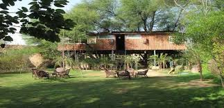 tree house jaipur. The Tree House Resort Jaipur U