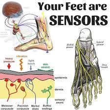 With Over 200 000 Sensory Nerve Endings Per Foot What Are