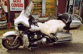 100 sheepskin motorcycle seat covers large