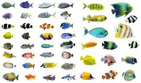 a variety of fish highdefinition picture 2