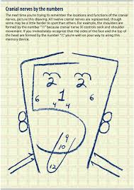 Cranial Nerve Examination Osteopathicthoughts
