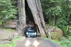 shrine drive through tree myers flat 2019 all you need to know before you go with photos tripadvisor