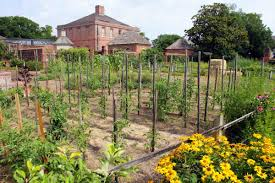 Kitchen Garden Program Tryons Tots Life Is A Garden Tryon Palace