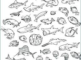 Ocean Fish Printable Coloring Pages Ocean Coloring Sheets Ocean Life
