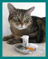 Feline Insulin Dosage Chart Insulin And Starting Scales Diabetic Cat Care