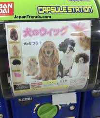 Dog Vending Machine Delectable Vending Machine Sells Wigs For Dogs Randommization