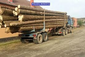 Image result for camioane cu lemne poze