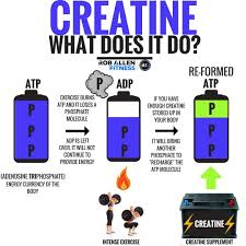 "1,161 Likes, 121 Comments - Rob Allen (@roballenfitness) on Instagram:  ""🔬Creatine🔬 . Creatine is a combin… 