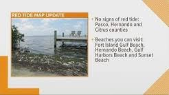 Red Tide At Tarpon Springs Beaches Living In Tampa Bay