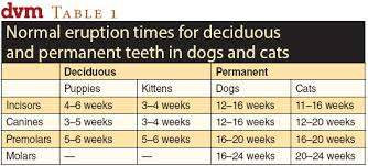Tooth Eruption And Exfoliation In Dogs And Cats