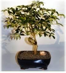 best low light office plants. Low Light Indoor Plants Best Office