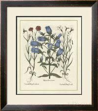 В <b>рамке</b> Ботанический домашний декор <b>постеры</b> и печатная ...