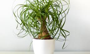 best indoor plants for your home or