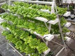 hydroponic gardens. how to start hydroponic gardening as a beginner- gardening, for beginners gardens t