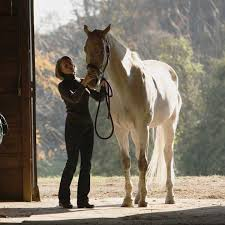 choosing supplements for senior horses