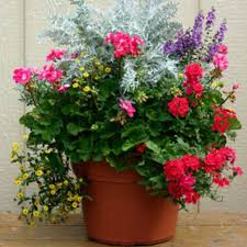 outdoor container gardening planting a