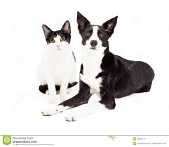 dog and cat black and white. Brilliant And Black And White Cat Dog And T