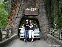 chandelier tree something i recommend everyone do at least once in their life is drive up the 101 danny and i both agree this was our favorite vacation
