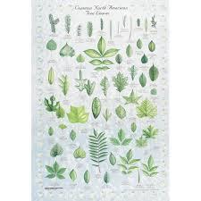 Leaf Identification Chart Carolina Com Ecology Of Nyc