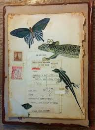 altered book cover audubon erflies and reptiles altered book artbook