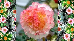 beautiful flower paintings hd1080p