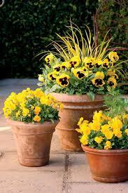 Small Picture Best 25 Full sun garden ideas on Pinterest Sun garden Full sun