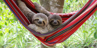 Image result for images for sloths