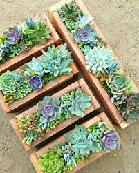 Small Picture Succulent Garden Ideas Garden Design Ideas