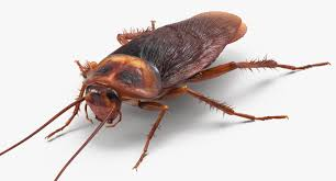 Resultado de imagen de cockroach