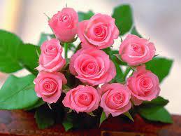 Beautiful Rose HD Wallpapers - Top Free ...