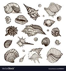 sea shells collection collection with various sea shells royalty free vector image