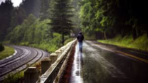 Image result for rain in forest
