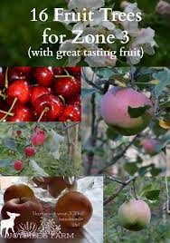 Your Fruit Trees Will Produce 10 Times More Fruits If You Do This How Often Should I Water My Fruit Trees